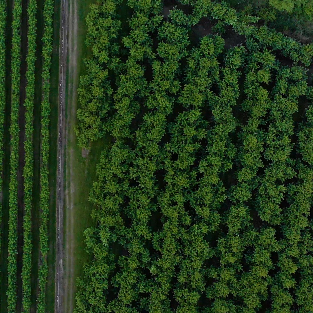 [FREE VIDEO] Cherry Farm on New Zealand from drone DJI Mavic